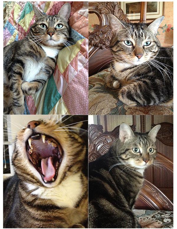 Fran's Cat, Beaver
