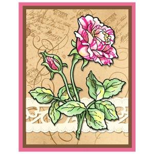 Rose Garden By Fran Seiford